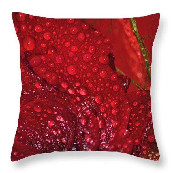 All Throw Pillows - Bellissima rosa rossa con rugiada Throw Pillow by Orazio Puccio #‎business‬ ‪#‎b2bmarketing‬ ‪#‎socialmediamarketing‬ ‪#‎contentmarketing‬ ‪#‎marketingtips‬ ‪#‎digitalmarketing‬ ‪#‎marketing‬