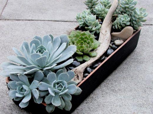 living arrangements succulent!