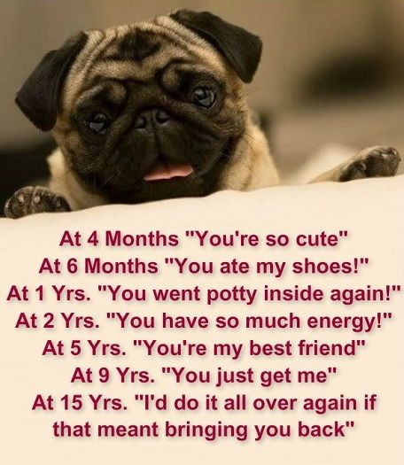 Favorite #Pug Quotes