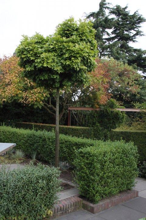 plantenencyclopedie bomen heesters dwarf small gardens en green. Black Bedroom Furniture Sets. Home Design Ideas