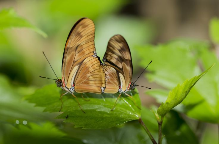 Butterfly couple by Miguel Esteves on 500px