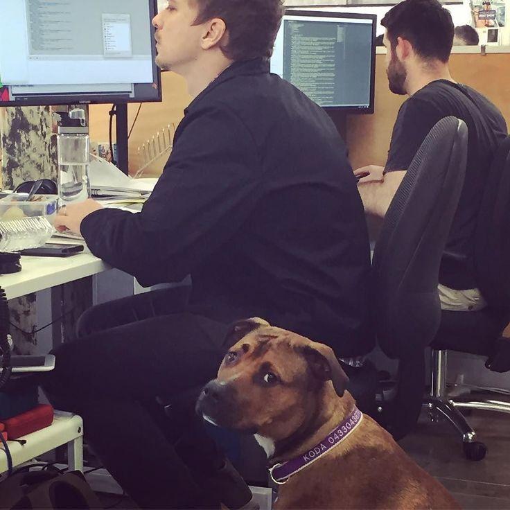 New hovering Producer is not impressed. #kodadontcare #wheninromeo #BarkDirector #DogitalProducer #Allthedogpunsofftheleash