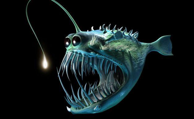 The Misunderstood Angler Fish | Deep sea creatures, Sea ...