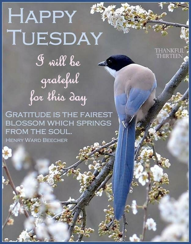 Happy Tuesday Grateful For This Day good morning tuesday tuesday quotes good…