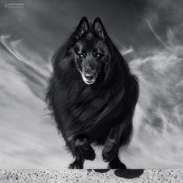 The Black  (11/52/2012) by wolf shadow photography, via Flickr