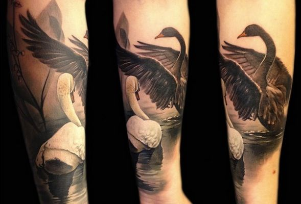 Swans tattoo tattoo pinterest swan tattoo swans and for Black swan tattoo