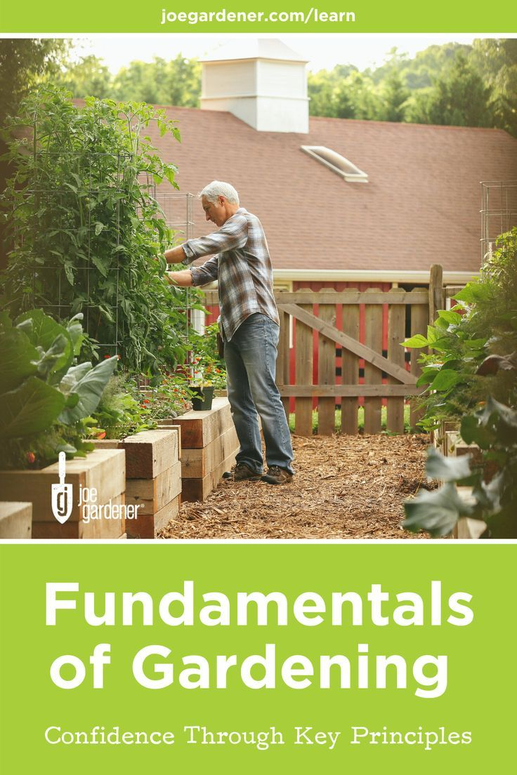 It S Important To Understand Gardening Basics And Gardening