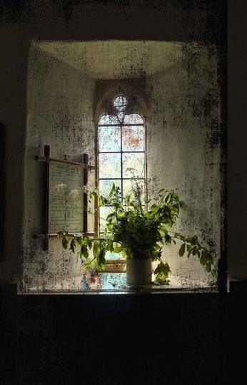 .Doors Gates Windows, Artists Eye, Church Windows, Antiques Windows, Nice Lights, Cottages Windows, The View, Plants, David Austin Rose