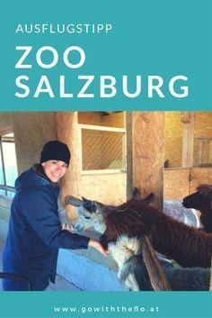 Alles was ihr über einen Besuch im Zoo Salzburg wissen müsst... Tiergarten, Ausflug mit Kindern in Salzburg, Mamablog aus Salzburg, Babyblog aus Salzburg, Unterwegs mit Kindern, Was tun in Salzburg, Zoo Hellbrunn,Streichelzoo, Tiere füttern, Alpaka füttern, GoWithTheFlo, Unterwegs mit Baby