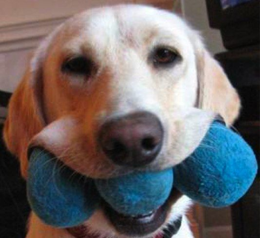 Top 8 Vet Sanctioned Home Remedies For Pets Meds For Dogs Pets Pet Medications