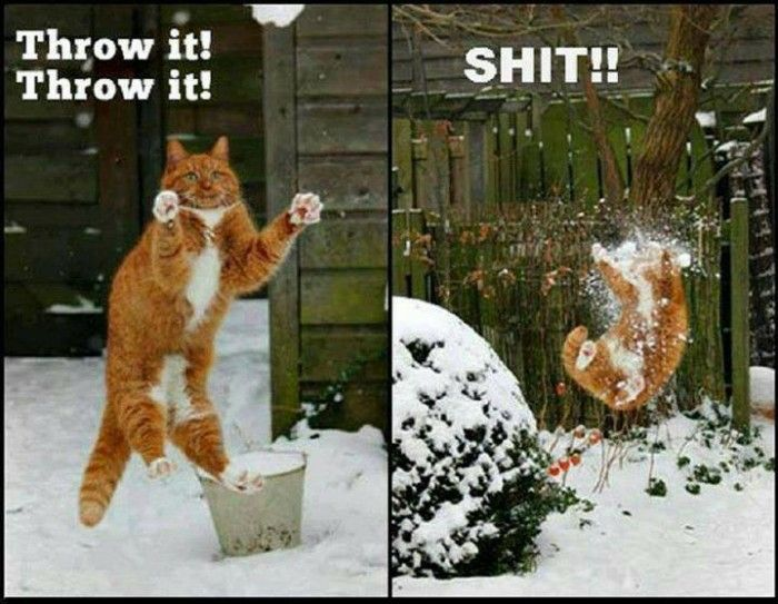 Funny cat having snowball fight  meme @funnycrazyviral