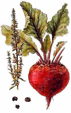 Salată de sfeclă și hrean – medicament curat