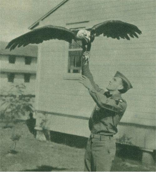 Membre de WWII A de la 101e division aéroportée américaine avec leur mascotte, le jeune Abe, à Fort Bragg, Fayetteville, Caroline du Nord. Mon fils était en poste ici, ainsi qu'une partie de la 101e Airborn. Très belles photos voir d'une époque disparue par mais toujours connectés au présent