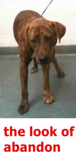 Cant see if she till is left 23 June 2016: 5/29 STILL THERE!! JET (A1787503) I am a male brown brindle and white Terrier mix. The shelter staff think I am about 1 year old. I was found as a stray and I may be available for adoption on 05/25/2016. — MIAMI DADE COUNTY ANIMAL SERVICES . https://www.facebook.com/urgentdogsofmiami/photos/pb.191859757515102.-2207520000.1463860591./1201042083263526/?type=3&theater
