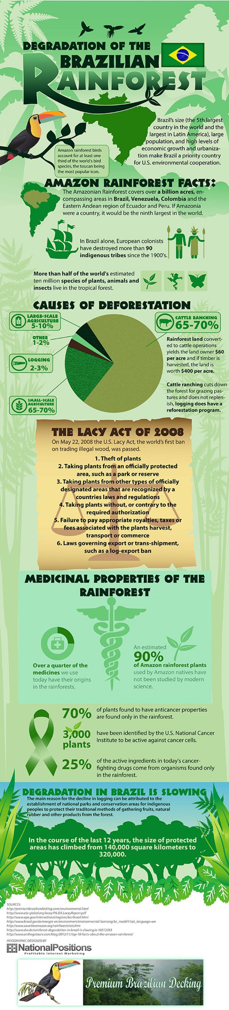 Deforestation of the Amazon Rainforest Infographic