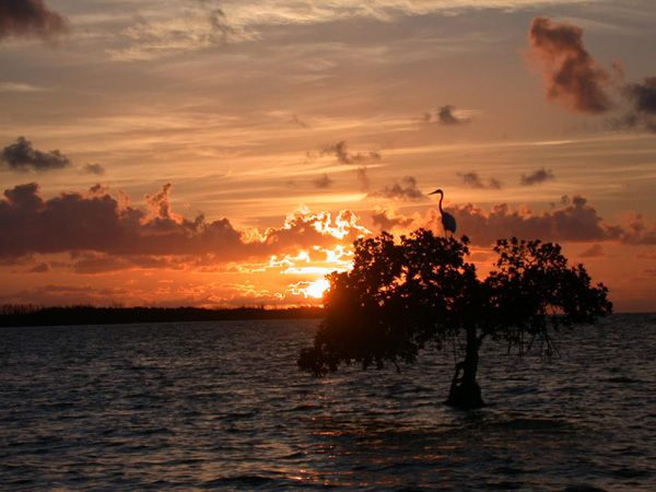 A favorite camping spot down in the Keys.  http://www.floridastateparks.org/longkey/photogallery.cfm