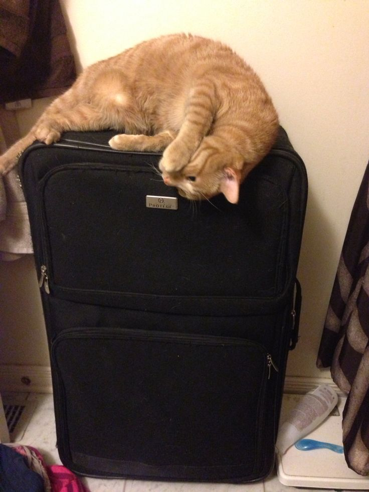 Jasper lounging on my luggage