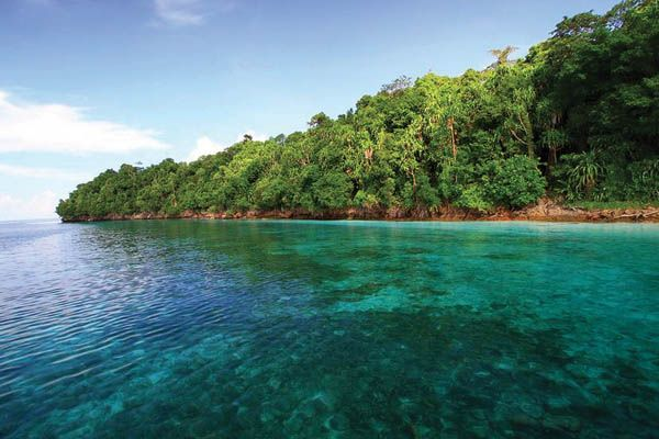 The lake on Kakaban Island, East Kalimantan, is one of only two places on earth that harbors stingless jellyfish.