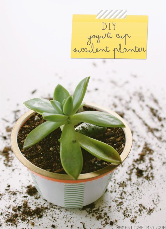 DIY-handmade-upcycled-sustainable-succulent-planter.  Materials: »Chobani yogurt cups » succulent plant » small rocks (enough to cover the base) » potting soil (about 3/4 cup) » gold sharpie » wrapping material (washi tape, ribbon, etc.) » glue gun » scissors