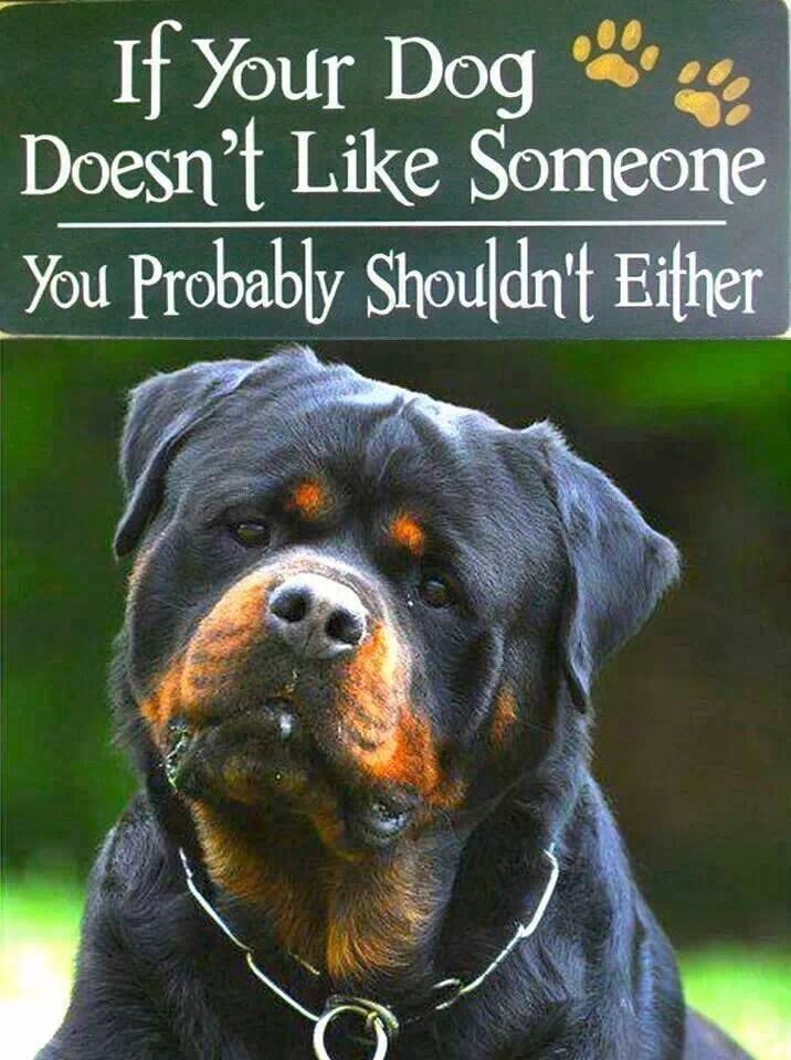 These are very true words. Listen to your #dog. #Rottweiler