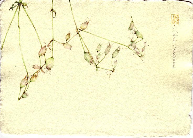 LAMPIONI BIANCHI. acquerello su carta a mano, 14x21 cm circa, anno 2006