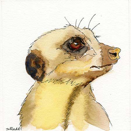 Wildlife drawings – Meerkats by Stuart Fowle