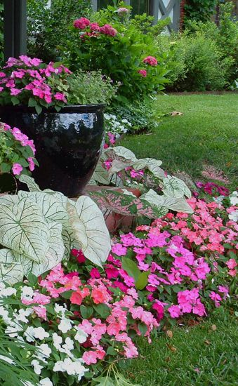 Impatience and Caladiums for shade gardening.  Yea, color for front door area NORTH facing.