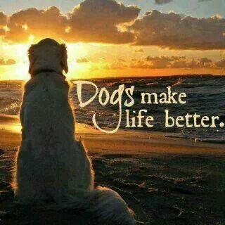Dog make life better