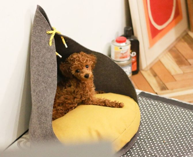 Bad Marlon's contemporary dog houses are as stylish as yours