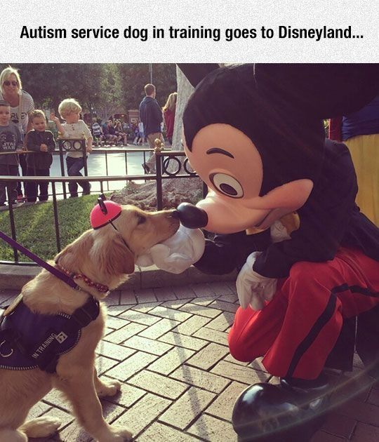Autism Service Dog In Training At Disney