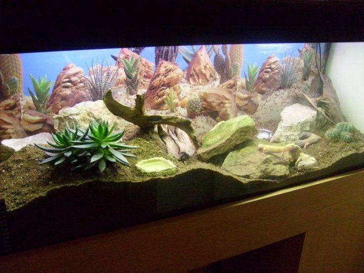gecko terrarium leopard gecko desert vivarium pictures please reptile forums leopard. Black Bedroom Furniture Sets. Home Design Ideas