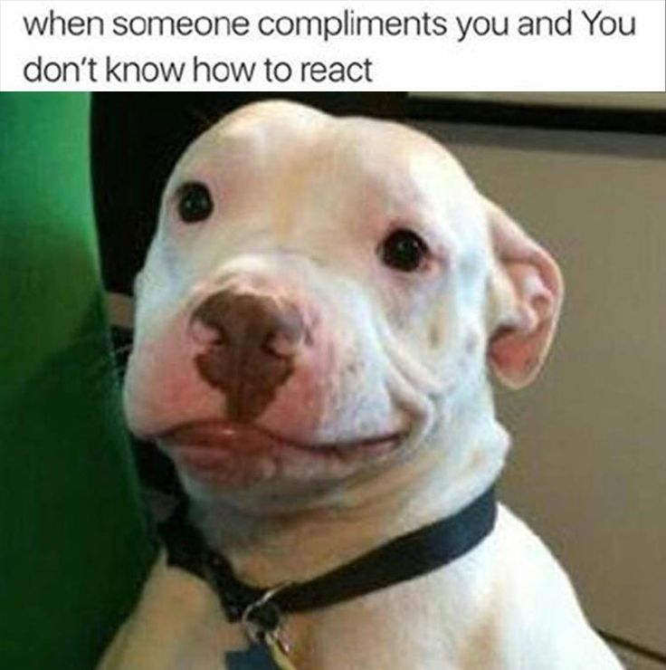 dbbc3918693837029a5a57a4ba37ea90 biscuits dog memes the 25 best funny dog faces ideas on pinterest smiling dog meme,Funny Dog Face Meme