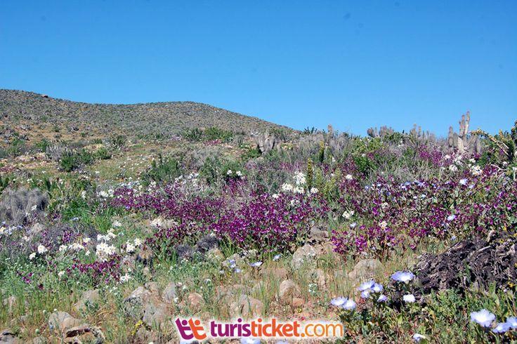 tour-desierto-florido-costero-desde-la-serena-3.jpg (960×640)