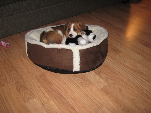 Hunter & his bed
