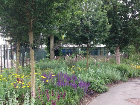 Cambridge University Queens' College garden. A great example of drought tolerant plants providing a lush overall effect
