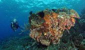 Bunaken, Underwater Paradise in North Sulawesi