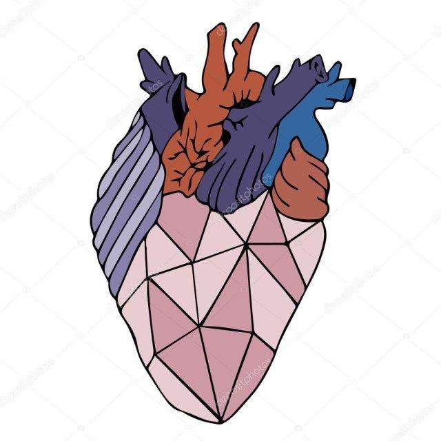Human Heart Anatomy   Human Heart Anatomy Heart Vector