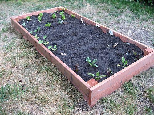 Best 25+ Box Garden Ideas On Pinterest   Raised Gardens, Raised Beds And  Raised Garden Beds
