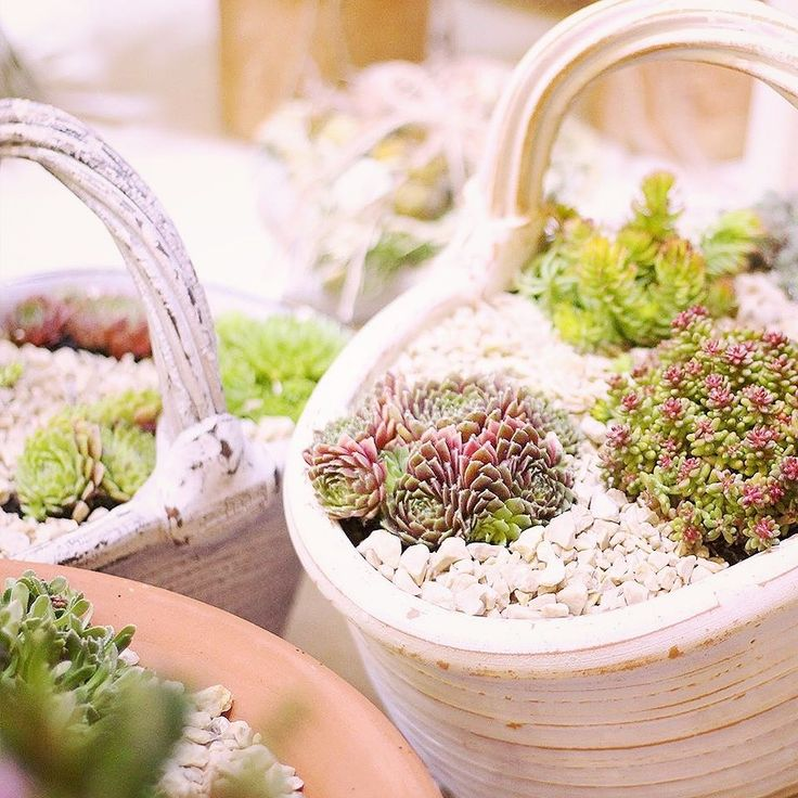 Mrazuvzdorné nádoby do exteriéru u nás  #kvetysilvia #kvetinarstvo #kvety #svadba #love #instagood #cute #follow #photooftheday #beautiful #tagsforlikes #happy#like4like #nature #style #nofilter #pretty #flowers #design #awesome #wedding #home #handmade #flower #summer #bride #weddingday #floral #naturelovers #picofthedayt