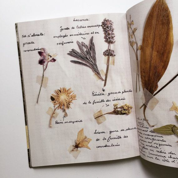 17 Best Images About Botanical On Pinterest House Tours