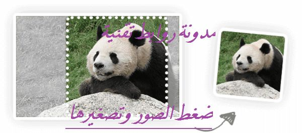 روابط تقنية ضغط الصور وتصغير حجمها Panda Bear Panda Animals