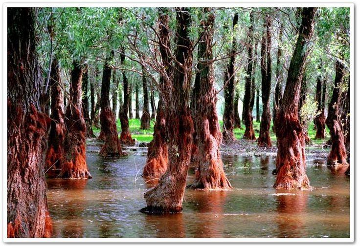 #Trees in the #Danube #Delta  http://nsromania.com/the-danube-delta/