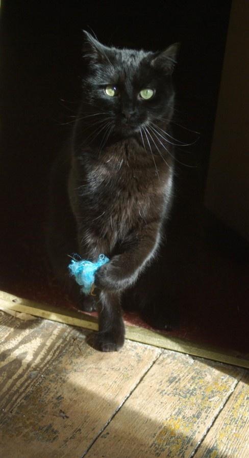 Vanquished the blue fuzzy! Bernadette Kazmarski's photo: Cat Kittens, Animal Black, Fun Photo, Black C T, Cat Things, Black Cat Meow, Cat Photo, Beautiful Black, Blue Fuzzy