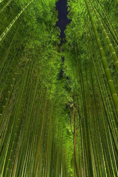"I don't use the word ""awesome"" much because it is over-used...but THIS is AWESOME! Beautiful Bamboo Forest by Night, Arashiyama, Kyoto, Japan."