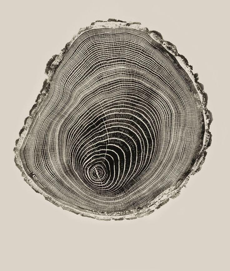 Bryan Nash Gill - Woodcuts, 2005-2011: Cat Art, Trees Rings, Woodgrain, Inspiration, Bryans Nash, Woods Grains, Woods Cut, Woodcut, Nash Gill