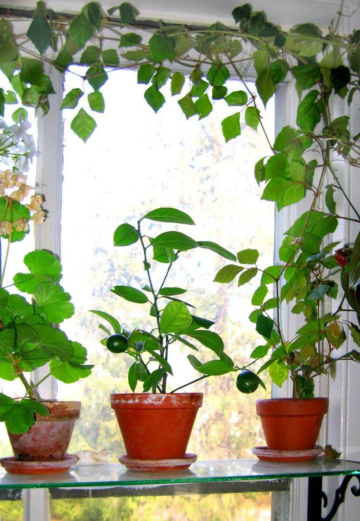 293 best Indoor garden images on Pinterest