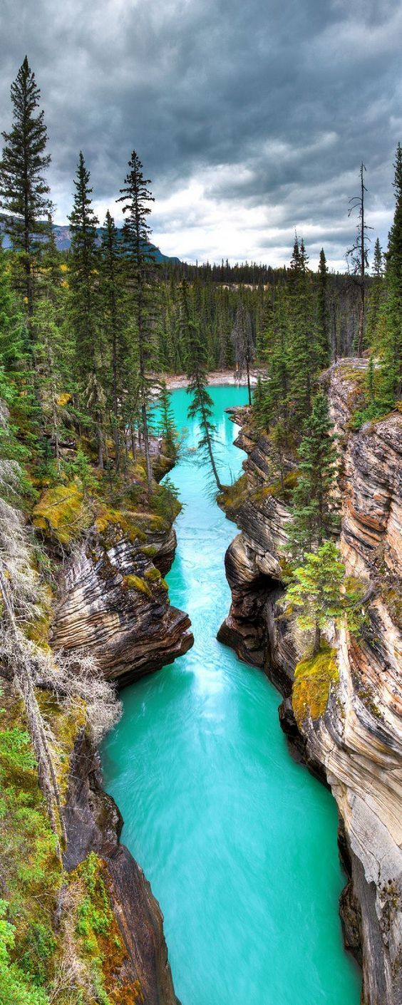 Athabasca Canyon in Jasper National Park