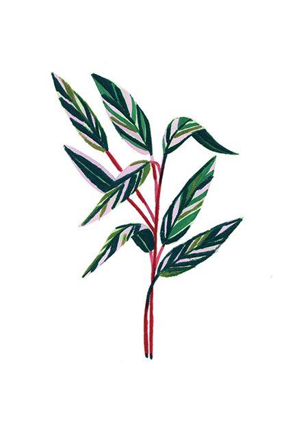 Plants - Beatrice Cerocchi