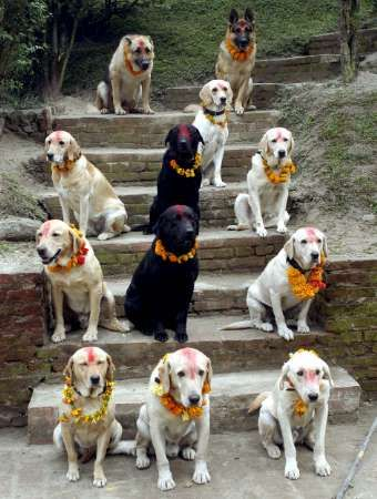 I love this photo .... dog worship day in Nepal