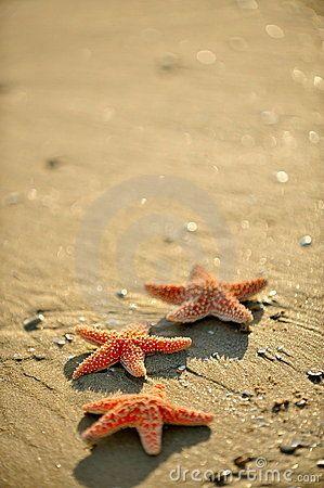 Stelle marine sulla sabbia bagnata ad alba/tramonto